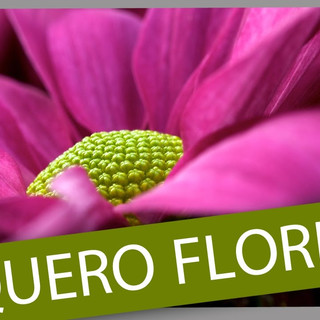 Projeto Quero Flores Terra Viva