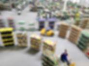 centro-de-distribuicao-de-flores-pao-de-