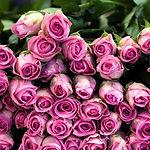roses-in-pink-1920x1080-wallpaper.jpg