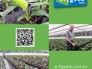Técnica de Irrigação Economiza Água e Fertilizantes