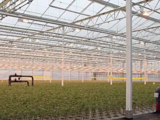 Qual a maneira mais eficiente na propagação de mudas de frutas e verduras?