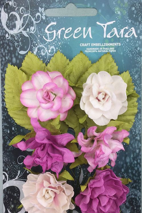 Green Tara Tea Roses - Rose