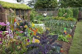 SAVE OUR ALLOTMENTS