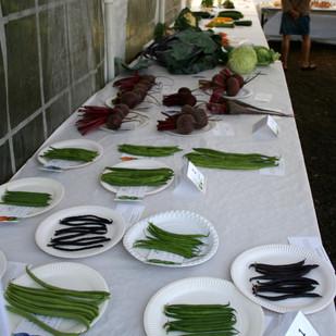 vegetables exhibits