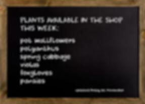 shop 011119.jpg