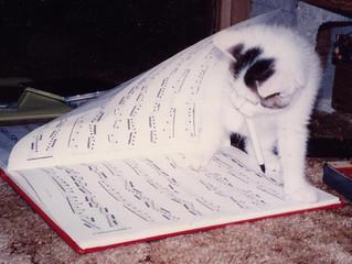 ピアニスト猫です