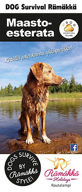 dog-survival_1.jpg