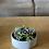 Thumbnail: קערת בטון, בעיצוב מיקס סוקולנטים