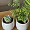 Thumbnail: בטון דמוי אבן, עם צמח לבחירה