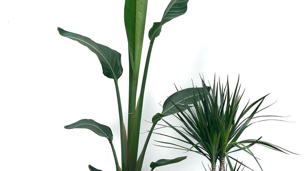כדי פיבר קל, אפור בהיר, עם צמח לבחירה