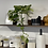 Thumbnail: עציץ מוזה M, עם צמח לבחירה