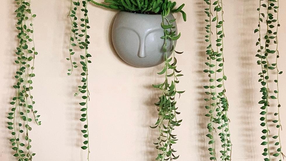 פרצוף ונוס, קרמיקה לתליה + צמח