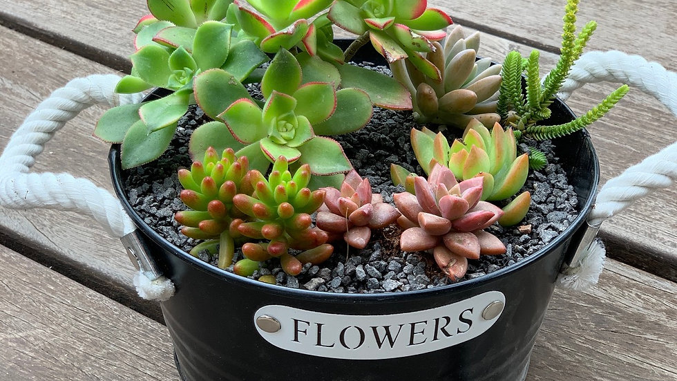 עציץ קערת, Flowers