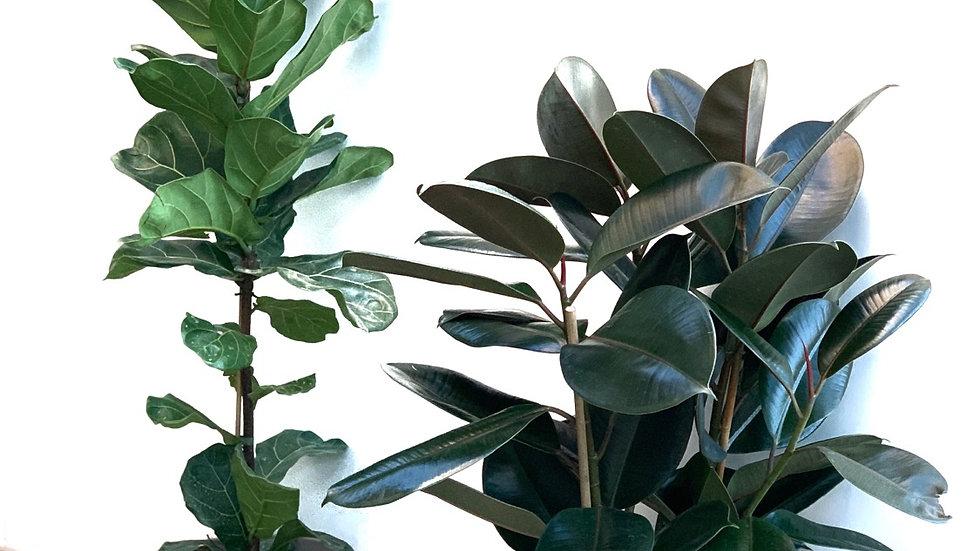 כד טרקוטה L, אפור עם צמח לבחירה