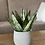 Thumbnail: בטון פסים לבן, עם צמח לבחירה