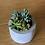 Thumbnail: עציץ בטון עגול רחב, עם צמח לבחירה