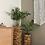 Thumbnail: כדי עץ, עם צמח לבחירה