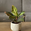 Thumbnail: בטון מדברי, עם צמח לבחירה