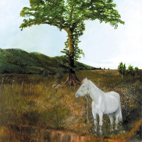 A Field In Cuba, Oil on Canvas, 30 x 40