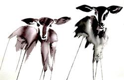Impala Akvarell.jpg
