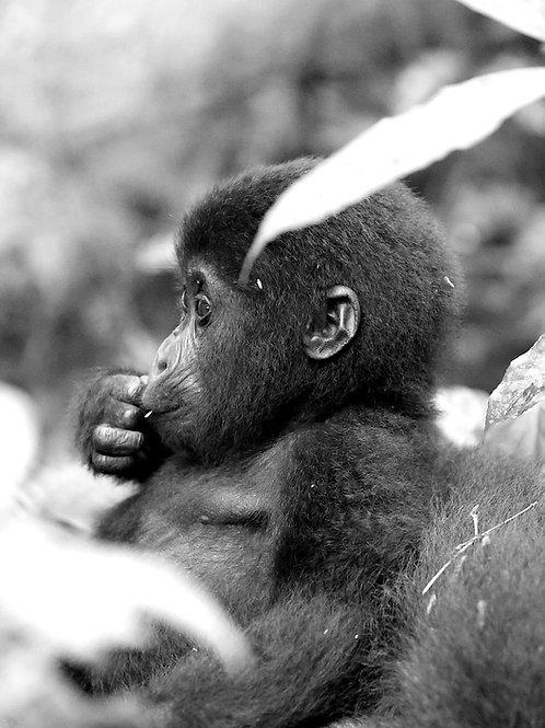 """""""Baby"""", Uganda (by Ulrike Nordquist)"""