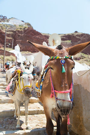 Donkeys traditional Accessories in Greece