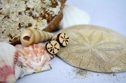 Sand dollar earrings