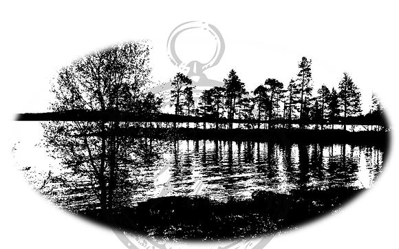 Vilda - Forest Silhouette