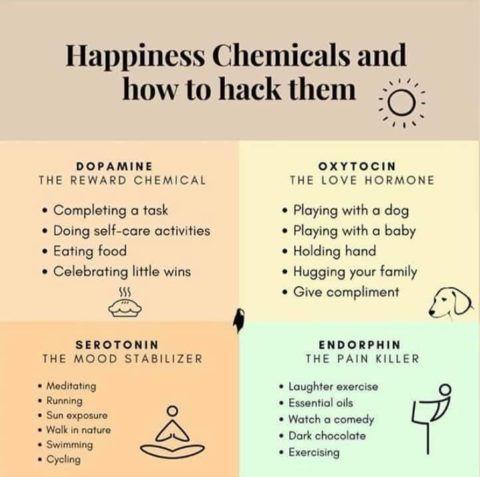 happy hormones.jpeg