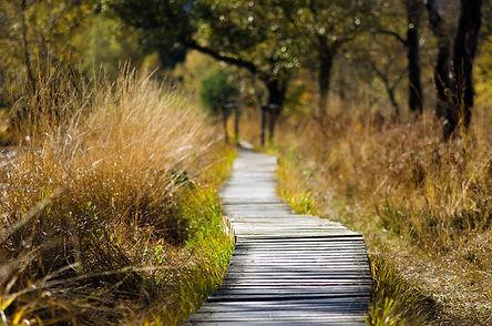 nature-walk-activities.jpeg