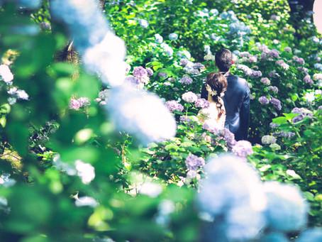 紫陽花の中のふたり