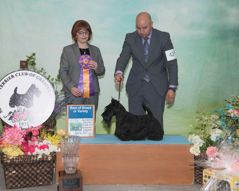 Best of Breed:  GCHG CH Kelwin's warrior Princess CA