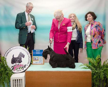SELECT DOG: GCHG CH CHARTHILL TOP BILLING