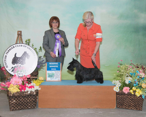 Reserve Winners Dog:  Charthill Victory at Stirling Castle