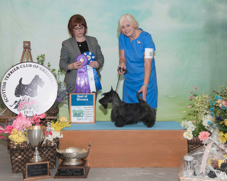Best of Winners:  Charthill Crown Princess