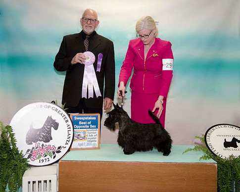PUPPY SWEEPSTAKES OPPOSITE SEX: CHARTHILL SHIRESCOT SHOW BIZ