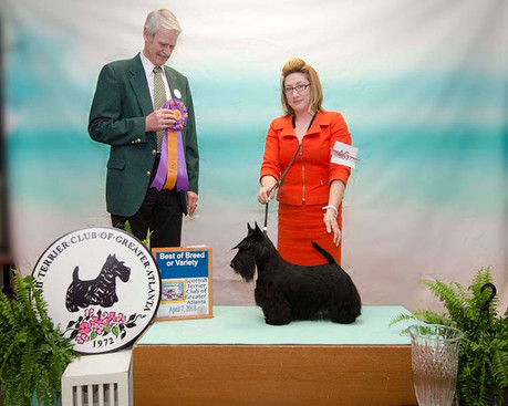BEST OF BREED: CH WHISKYBAE HASLEMERE HABANERA