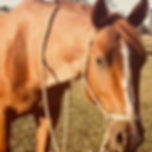 Horse Roy
