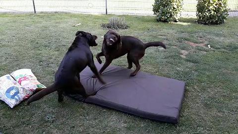 Spiel und Spaß im Garten