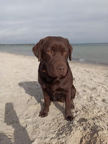 Paula an der Ostsee
