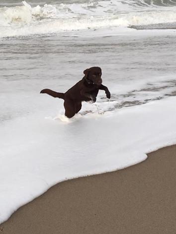 Spaß in den Wellen