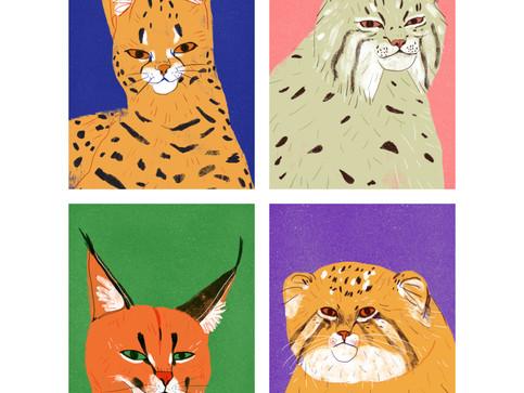 Big Cat Portraits
