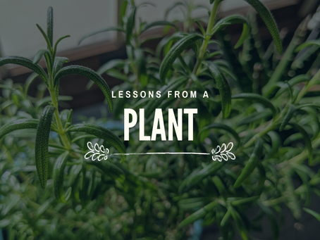 Lessons From A Plant