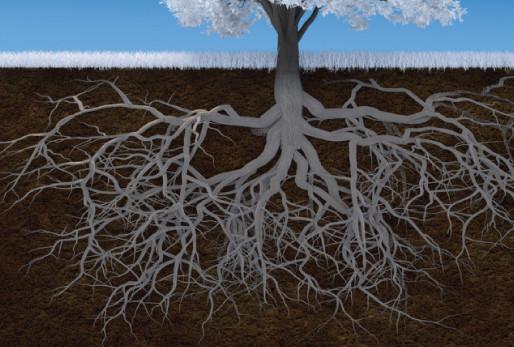 Healing Your Soil, Grow Your Roots, Winter's Gift of Dormancy