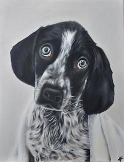 Puppy Todd