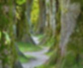 trees-2897757_1920.jpg