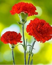 Capture- flower.PNG