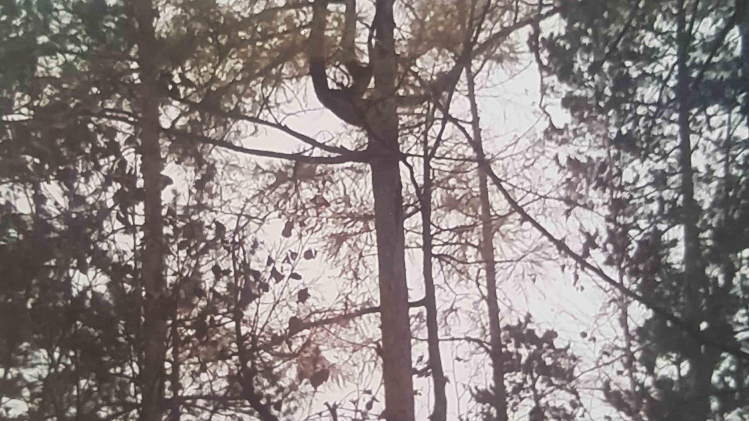 Синицина Арина 5 лет Лесной трезубец