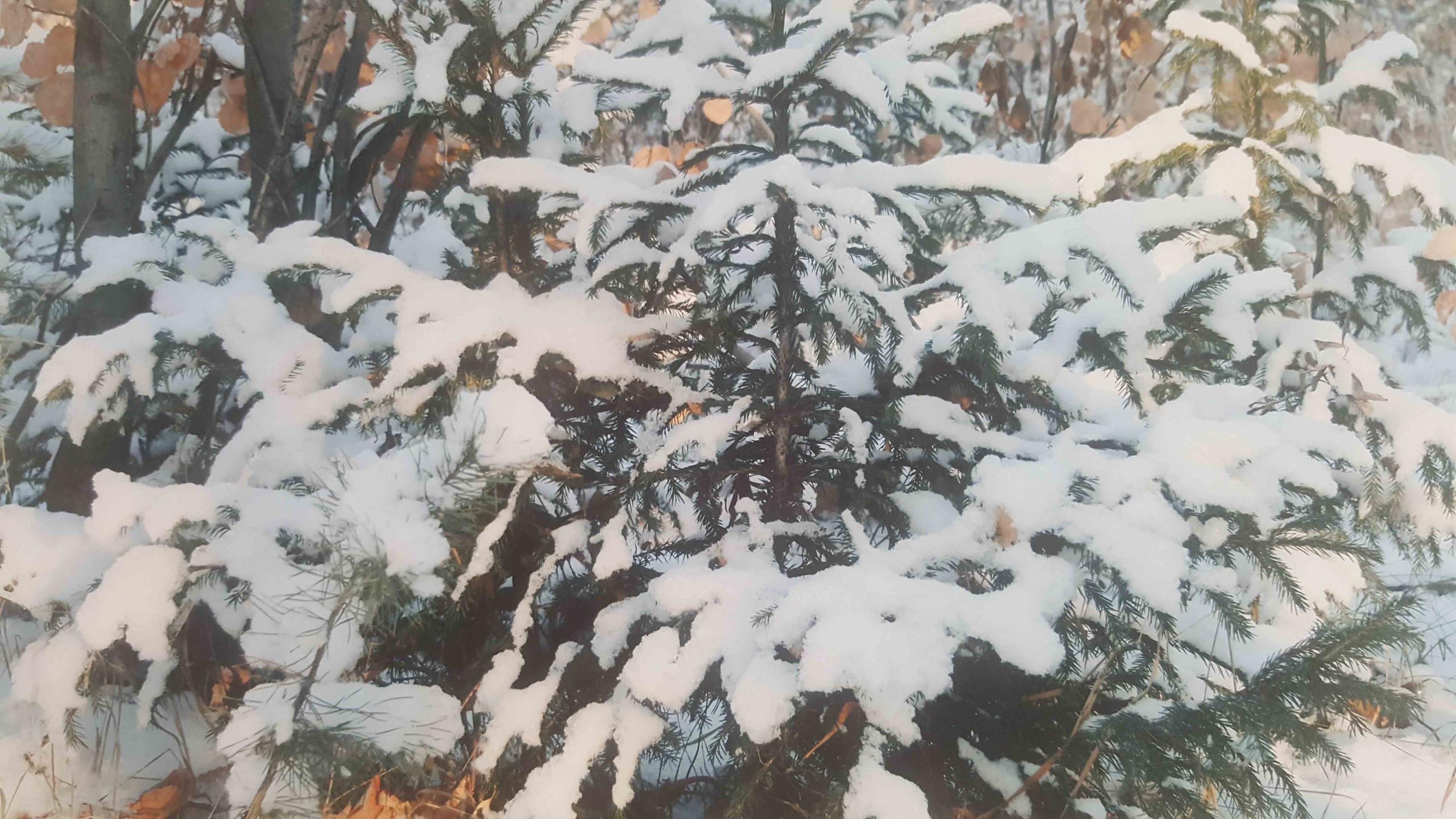 Непомнящих Матвей 4 года В лесу родилась ёлочка