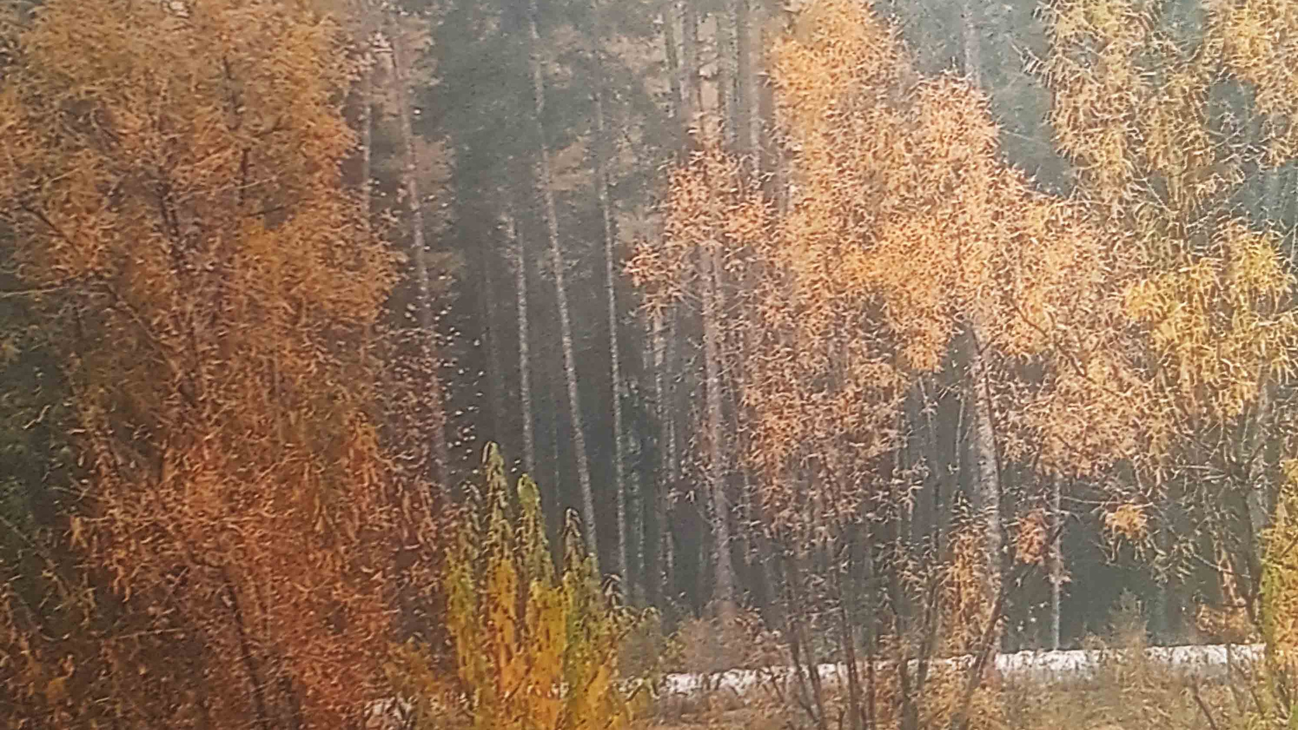 Симчук Марк 5 лет Осенний марафон